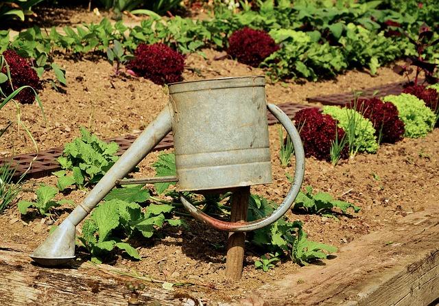 salat i tør have